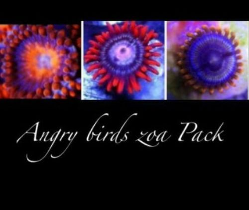 angry bird zoa pack set of 3 zoas