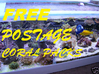 FREE POSTAGE CORAL PACK F Mix of sps frags on rock rubble free postage,copepods,phytoplankton