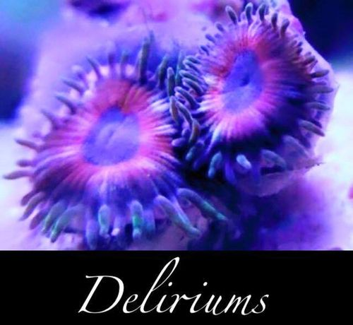 single deliurium micro zoa on frag plug