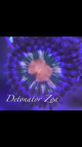 single detonator zoa on frag plug