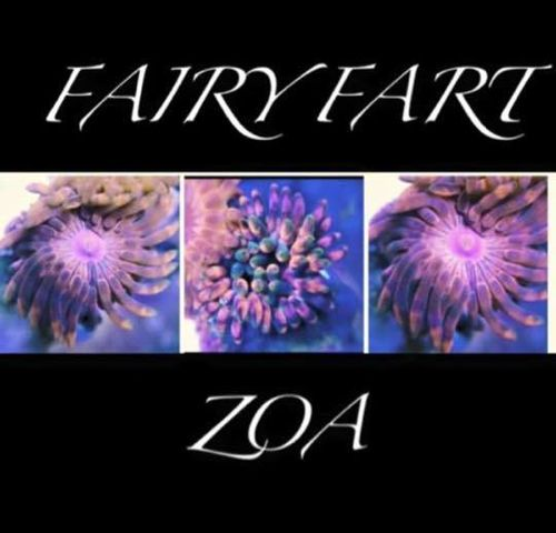 Fairy fart zoa on frag plug