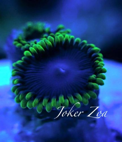 joker zoa on frag plug