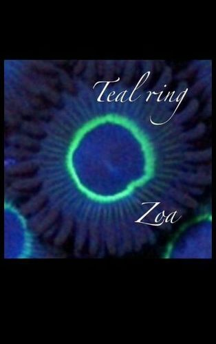 teal ring zoa on plug