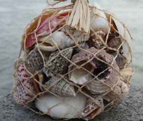 bag of mixed shells for hermit crab shells and decoration marine tank