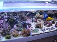 soft coral frag pack of 4 ,corals,mix of xenias ,zoas,mushrooms etc