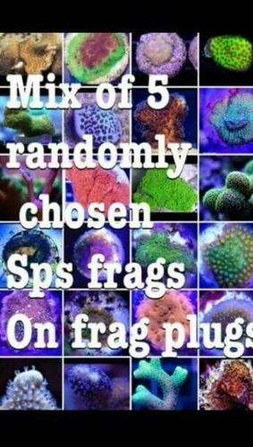 mix of 5 randomly picked from our stock sps frags on frag plugs