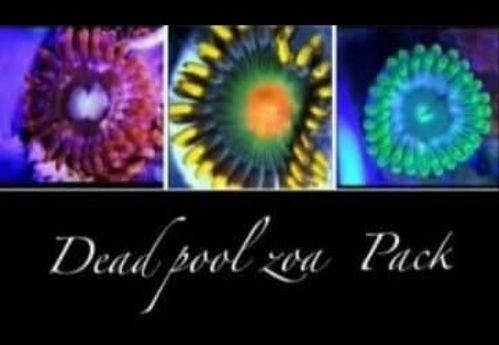 dead pool zoa pack of 3 zoas frags