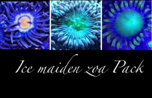 ice maiden zoa pack set of 3 zoas pictured