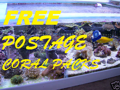 FREE POSTAGE CORAL PACK B, corals,zoas,snails xenia,Mushrooms,blue clove polyps,copepods,phtyo