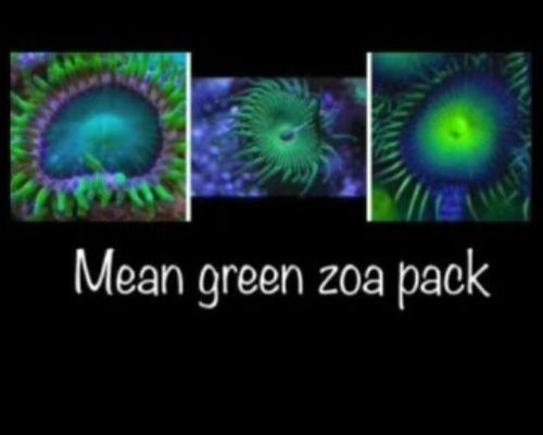 mean green zoa pack of 3 zoas