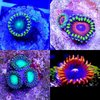 pack of four zoas radio,fire ice,eagle,mardis gras