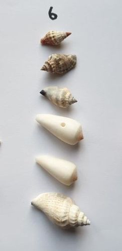 pack sq6, empty hermit crab shells wysiwyg