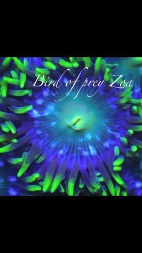 bird of prey zoa on frag plug