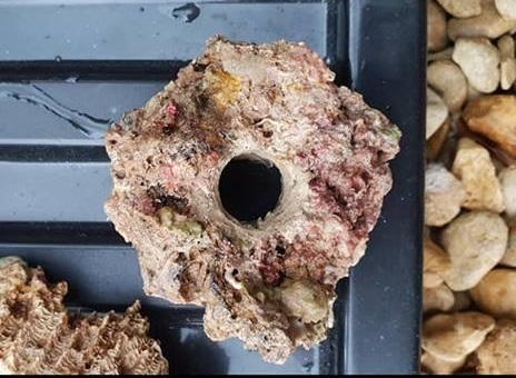 single live rock frag holders drilled to hold frag plugs create the natural look