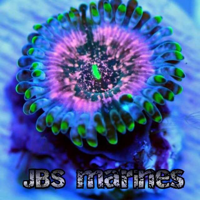 Jbs Marines Mail Order Corals Coral Frags And Live Foods